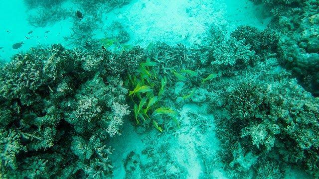 10分钟带你登上马尔代夫无人岛与海龟共游,居民岛一日浮潜攻略