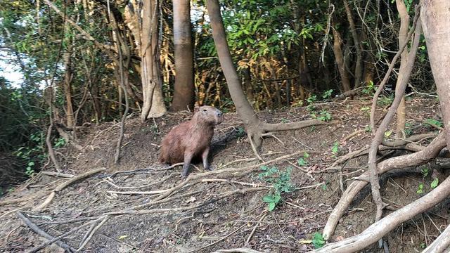 深入玻利维亚亚马逊雨林3天2夜冒险记